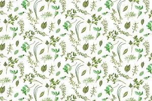 Seamless Garden Herbs Pattern