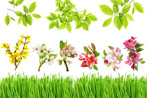 Green grass spring flowers leaves