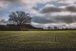 Field in Autumn Landscape and Clouds
