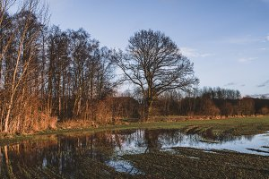 Muddy Field and Trees in Autumn