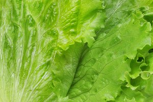 fresh lettuce leaf background