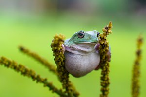 animal, amphibian, nature, wildlife,