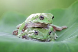 frog, amphibian, nature, wildlife,