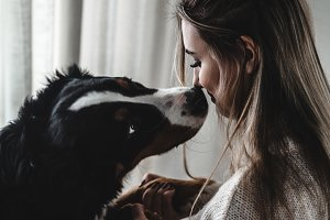 the girl kisses Bernese Mountain Dog