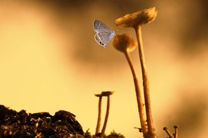 mushroom, insect, butterfly,