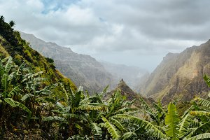 Banana plants on the trekking route to Xo-Xo valley. Harsh peaks of the mountains in background. Santo Antao island, Cape Verde