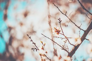 flowering trees, spring.