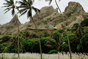 Palm trees near dried-up stream surrounded by fertile green valley and rugged cliffs in background. Santo Antao, Cabe Verde.