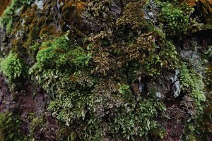 The tree covered with moss