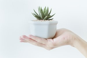 Hand holding a pot with a cactus