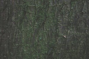Natural green bark of tree texture