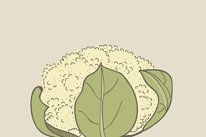 Illustration of cauliflower