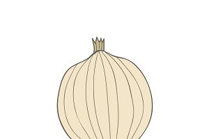 Illustration of an onion