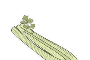 Illustration of a celery