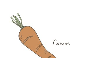 Illustration of a carrot