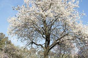 blooming trees on field in spring