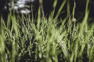 Fresh Grass (ideal Background Photo)