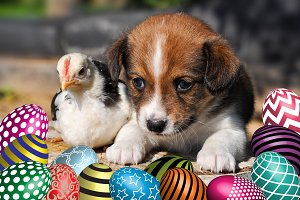 Easter eggs, puppy dog and chicken