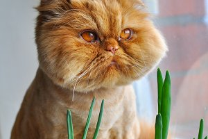 Funny cat and green onion
