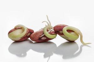 Healthy food.Green bean.Green shoots
