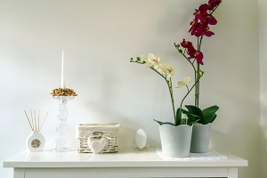 Home interior with an orchid