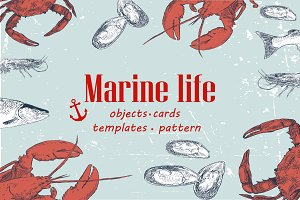 Marine life hand drawn elements