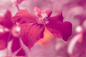 Bright burgundy flower.