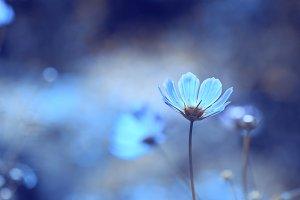 Blue delicate flowers in the garden