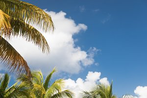 Tropical Palm Branches Against Sky