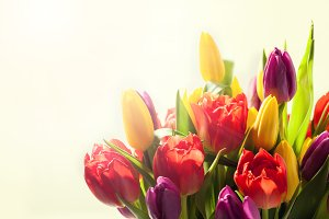 Bouquet of colorful bright tulips