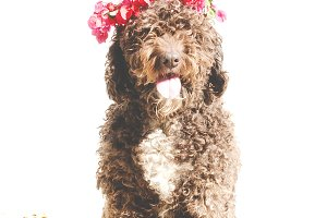 lovely flirty dog