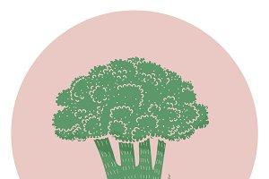 Illustration of a broccoli