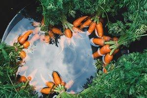 fresh baby carrot