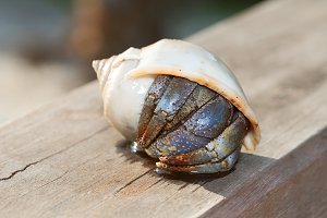 hermit crab in shell on a seaside