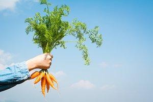 Female hand holding baby carrot