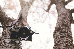 Vintage camera hang on tree