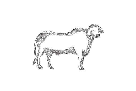 Brahman Bull Side Doodle Side