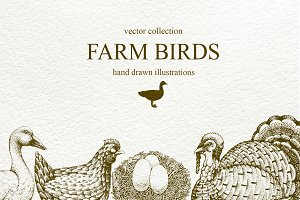 Farm Birds Vector collection