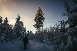 Winter Forest with Snow and Sunset