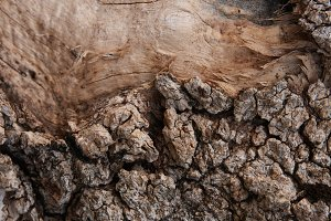 Old bark tree texture