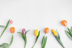 Different colorful tulips on white