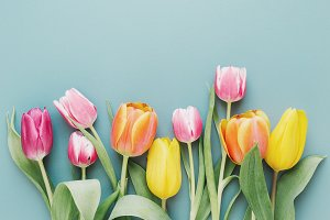 Beautiful blooming tulips on gray
