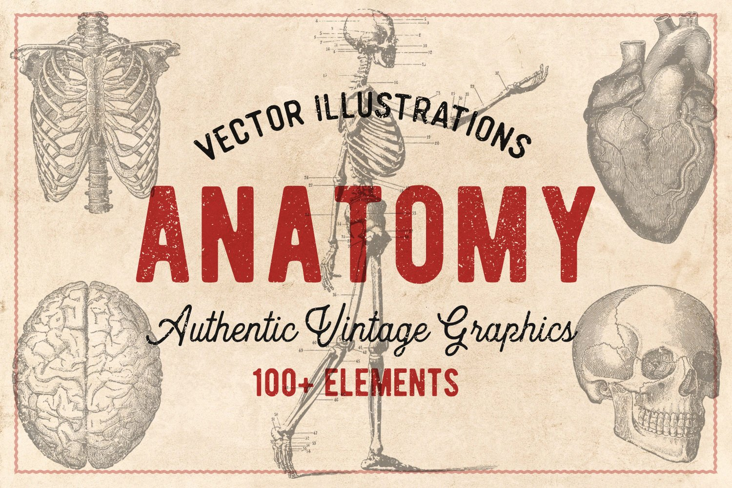 100 Vintage Anatomy Vectors ~ Illustrations ~ Creative Market