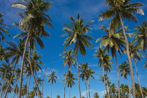 Palms tree in asian exotic landscape
