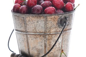 Fresh Picked Cherries in Metal Pail
