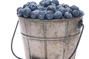 Pail of Fresh Picked Blueberries