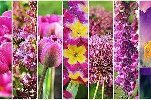 Beautiful set of pink flowers