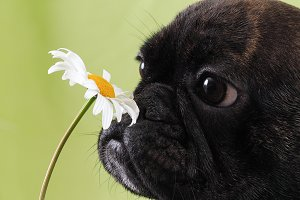 Dog smelling the flower