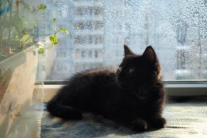 Kitten on the windowsill