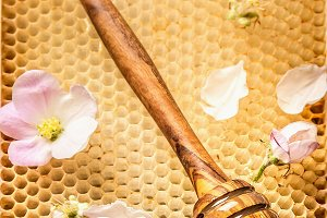 Honey wooden Dipper on honeycomb